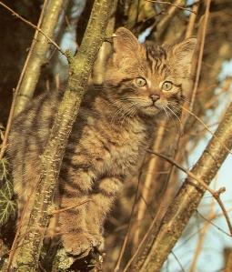 Chaton sauvage perché sur un arbre