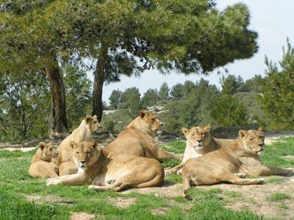 Lionnes groupe1
