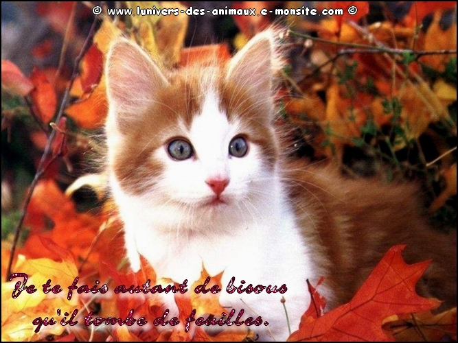 Carte chat automne1