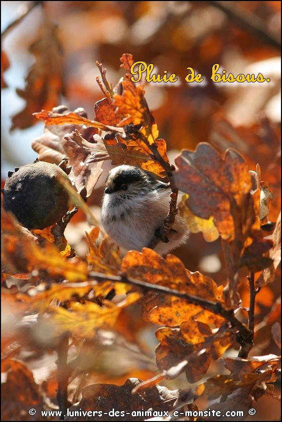 Carte mésange automne1